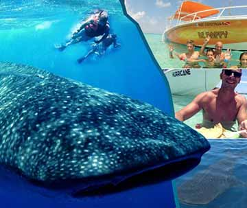 Family Excursions in Riviera Maya Whale Shark Tour