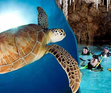 Swim with Turtles and Cenotes