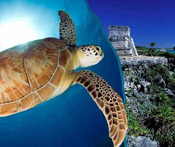 playa del carmen Snorkeling and Tulum Ruins Tour