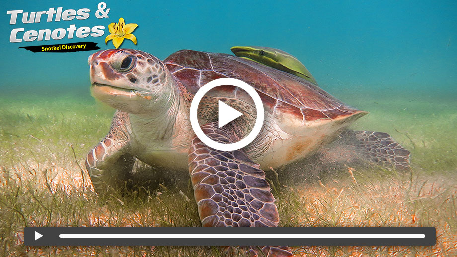 Snorkeling in cancun on Vimeo